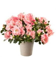 promotional codes  proflowers